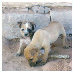 Stray puppies