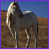 Photo of Stallion