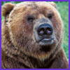 Photo of Bear