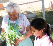 Native American Elder and child in a community garden