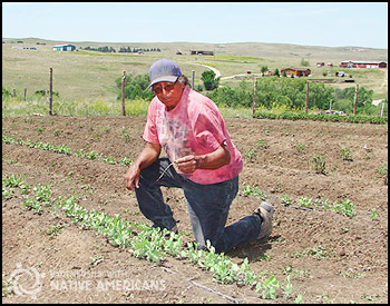 John weeding in the Oyate Teca community garden in Kyle, SD (Pine Ridge.)