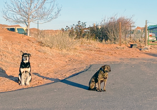 A photo of two dogs in the same neighborhood as Dr. Holgate's clinic
