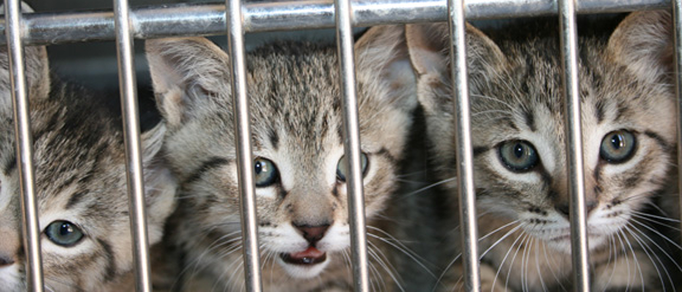 Help prevent unwanted kittens - support the Pet Promise campaign!