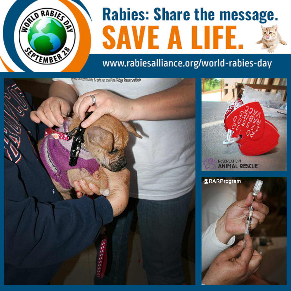 World Rabies Day | RAR Success Story - Reservation Animal Rescue