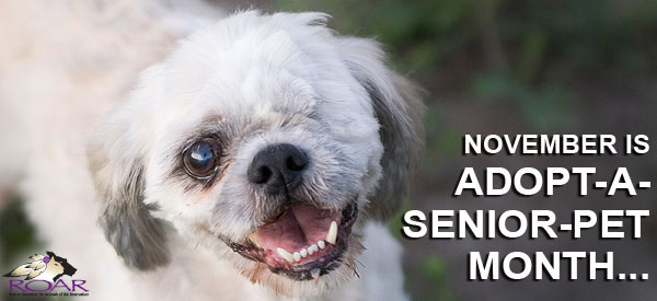 Help abandoned senior dogs like Dandy... Donate today!