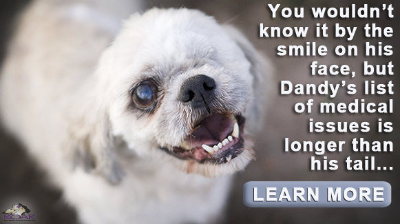 Donate today to help cats dogs like Dandy!