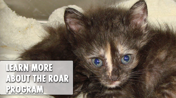 Learn more about the ROAR Program