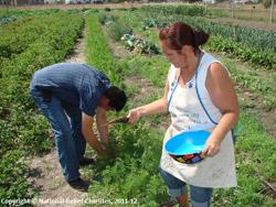 Native Americans gardening